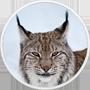 Pobranie pełnego instalatora macOS 10.13 z AppStore - ostatni post przez Misiek